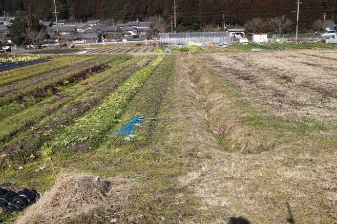 京都市左京区貸農園  コクーン農園(静市)始まります